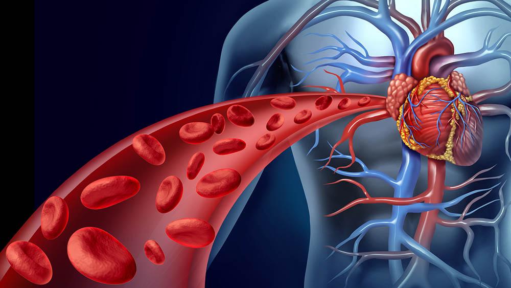 arteria coracao